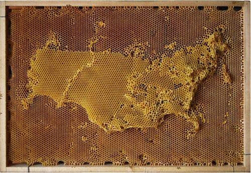 carte-abeille-cire-ruche-02