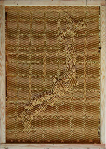 carte-abeille-cire-ruche-04-689x920